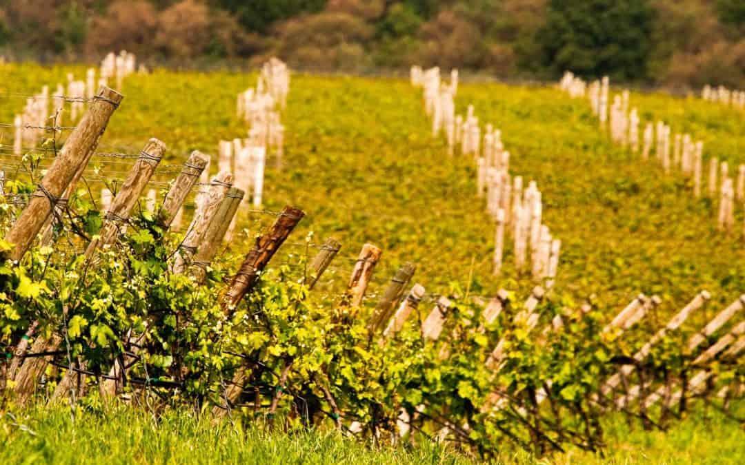 I vini veronesi e le loro radici nel territorio, dalla Valpolicella a Soave e al lago di Garda