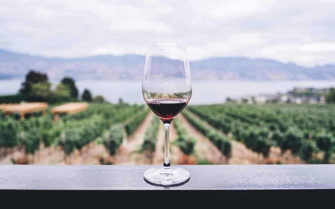Vino rosso e salute: bere il Valpolicella fa bene anche a denti e gengive