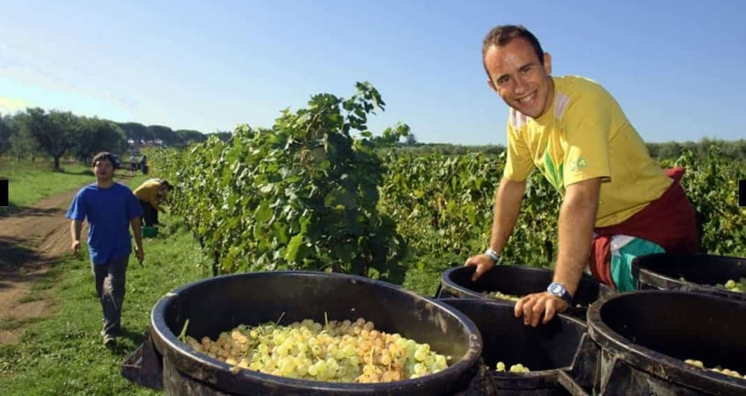 """Vinitaly e sociale, in aumento la produzione dei """"vini solidali"""" che uniscono etica e qualità"""