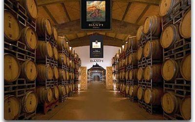 Brunello di Montalcino, l'azienda vinicola Banfi compie 40 anni con le degustazioni