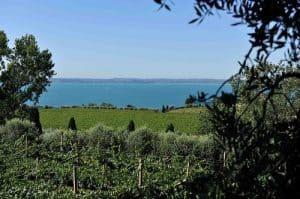 Vini Bardolino - panorama dei vigneti del vino Bardolino sul lago di Garda -