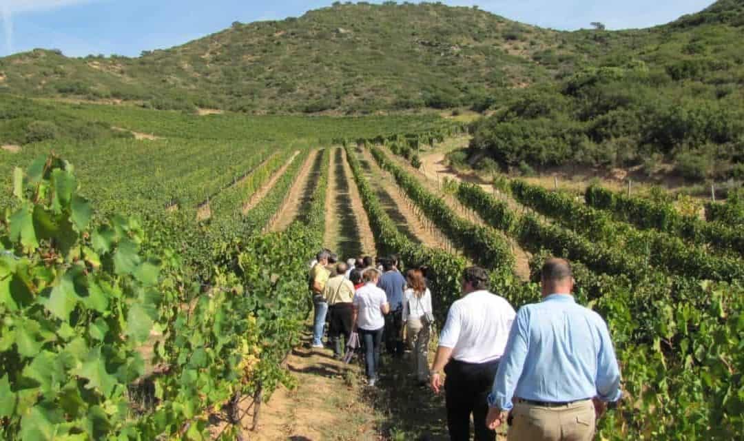 """Turismo del vino, l'enogastronomia in Italia fattura 12 miliardi di euro. Il ministro Centinaio: """"Strada vincente per l'Italia"""""""