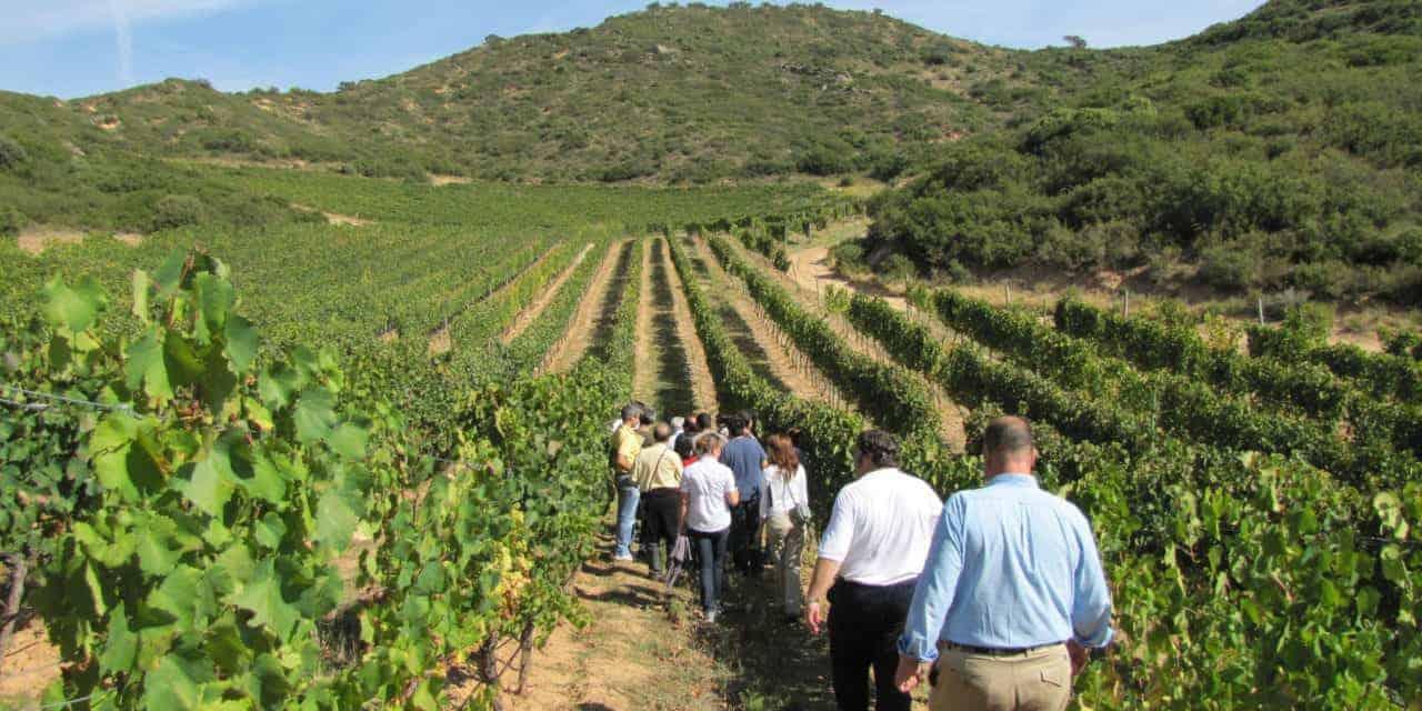 Enoturismo - Turismo del Vino - Enogastronomia