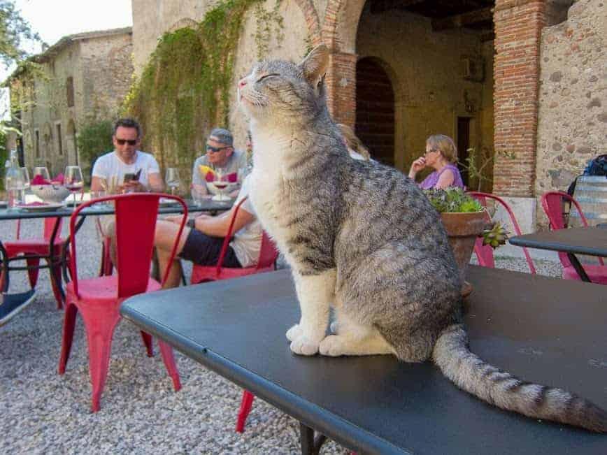 Cicloturismo - itinerari fra cultura e natura - Verona, Valpolicella, Custoza