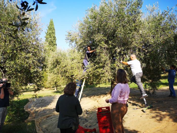Olio di oliva del lago di Garda: il 2018 ottima produzione per quantità e qualità. Un olio eccellente per le ricette di cucina