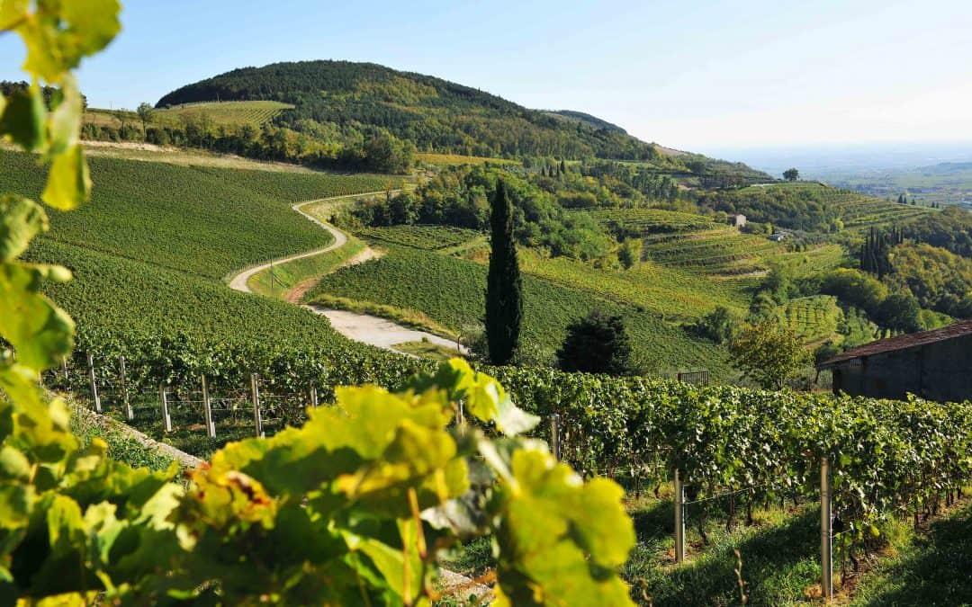 Wine&food tourism: ecco chi è il turista enogastronomico e che cosa cerca. Strategie  e consigli per le aziende enogastronomiche