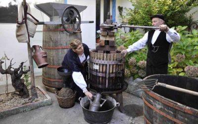 """Vino artigianale: domenica 18 e lunedì 19 novembre a Faenza """"Back to the Wine"""". Rassegna con 130 piccoli produttori"""