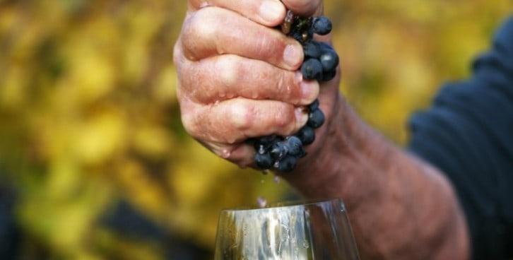 """Vino """"naturale"""" (o artigianale): alla scoperta di una nicchia interessante che unisce coltivazione biologica e tradizione in cantina"""