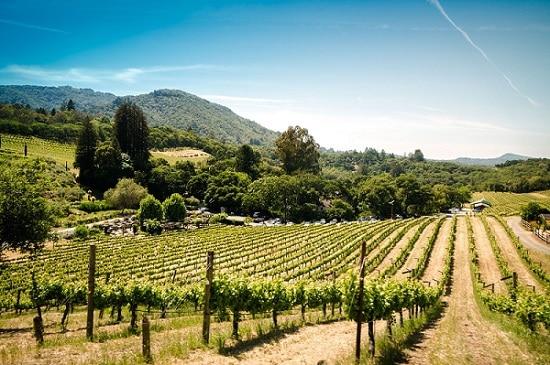 Donne della Vite: competenza e innovazione per la migliore qualità nella produzione vinicola