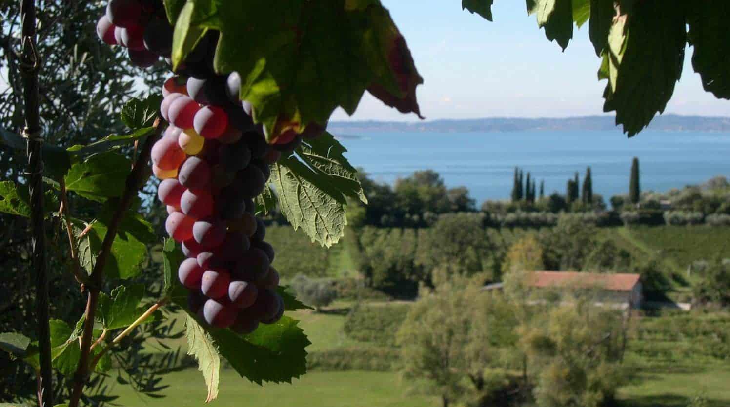 Cicloturismo Strada del Vino Bardolino - panorama dei vigneti di Bardolino sul Lago di Garda