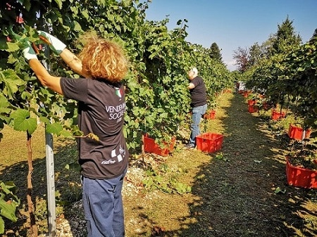 Vendemmia 2019: qualità da buona a ottima, produzione in calo del 16%. I cambiamenti climatici si fanno sentire sulla filiera del vino. Positivo il caldo di questo settembre