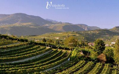 Valpolicella Education Program: il corso di formazione del Consorzio tutela vini Valpolicella apre la settimana dell'Anteprima Amarone 2016