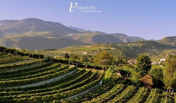Valpolicella Education Program. Dal 29 al 31 gennaio il secondo corso di formazione sui vini Valpolicella in occasione di Anteprima Amarone 2015