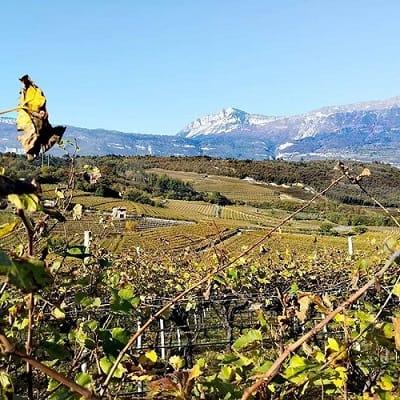 Vino artigianale. A marzo torna Vinifera: degustazione dei vini dell'arco alpino alla Fiera di Trento. Con l'abbinamento ai cibi del territorio