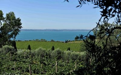 Mete lago di Garda: giro a piedi (o in bicicletta) sulle colline di Bardolino, la terra del vino Chiaretto. Una pausa di relax fra natura, storia e cultura