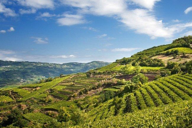 Vino Soave: dal Consorzio di tutela dei vini Soave un modello di sostenibilità. Attenzione all'ambiente dal vigneto alla produzione vinicola