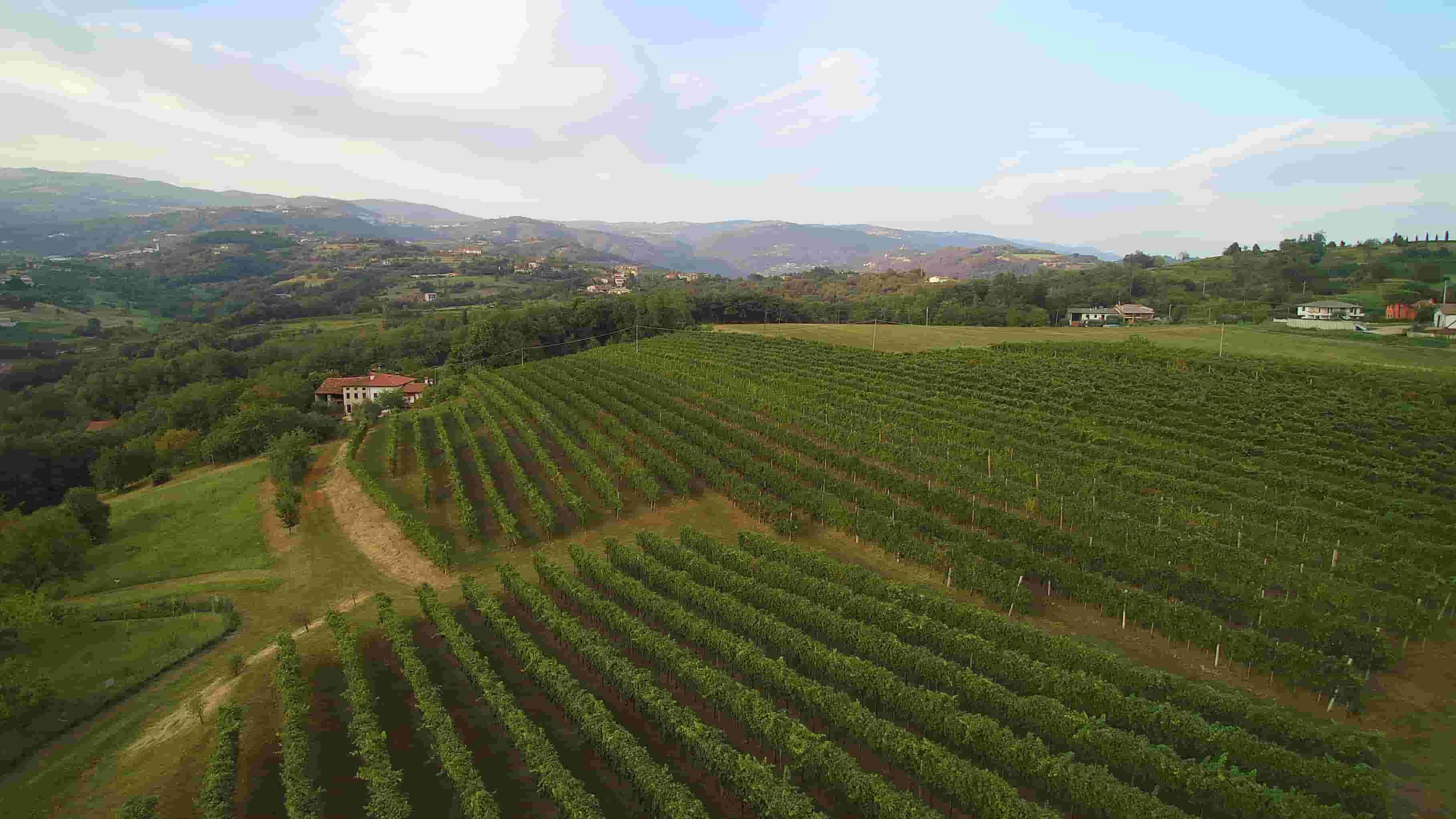 Vigneto-sulle-colline-di-Breganze-Azienda-Vitacchio-Emilio- Vespaiolona 2019