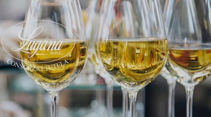 Degustazione vino Lugana - Lago di Garda - Verona