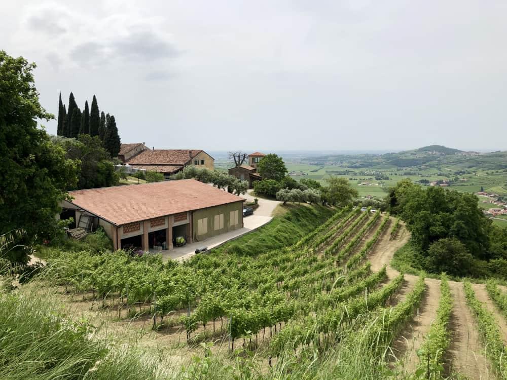 Corte Sant'Alda Azienda vinicola di Mezzane di Sotto - vini Valpolicella