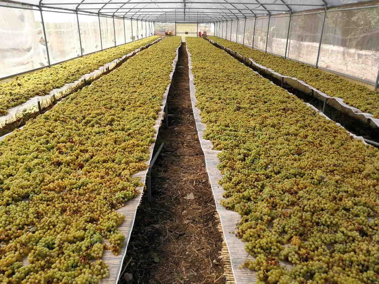 vini di sicilia appassimento uve moscato su graticci di canne