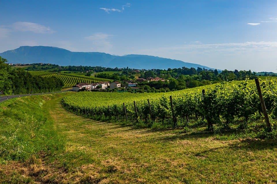 Veneto, Prosecco