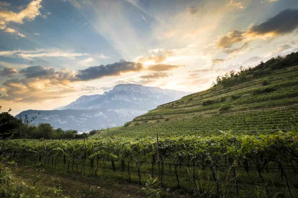 Vini Trentino Alto Adige