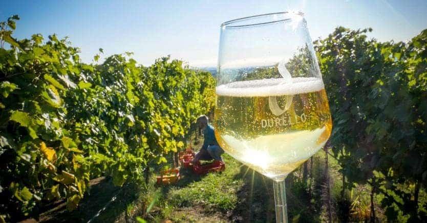 Il Vino Durello: una ricchezza per i territori di Verona e Vicenza