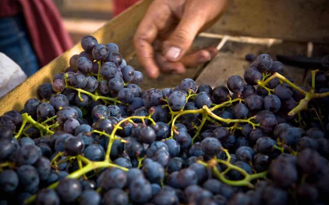 Vino Biologico, Vino Biodinamico e Vino Naturale: l'importanza del riconoscimento del territorio di origine. Ce ne parla la Sommelier AIS Lorena Ceolin