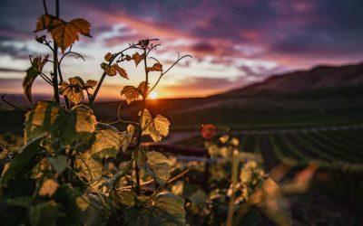 """Presentato """"Tranquillamente Enoturismo"""", il nuovo protocollo internazionale per una forma responsabile del turismo del vino"""