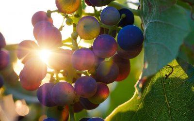 Val Polis Cellae 2020: il maltempo non ferma gli winelovers per l'evento della Valpolicella